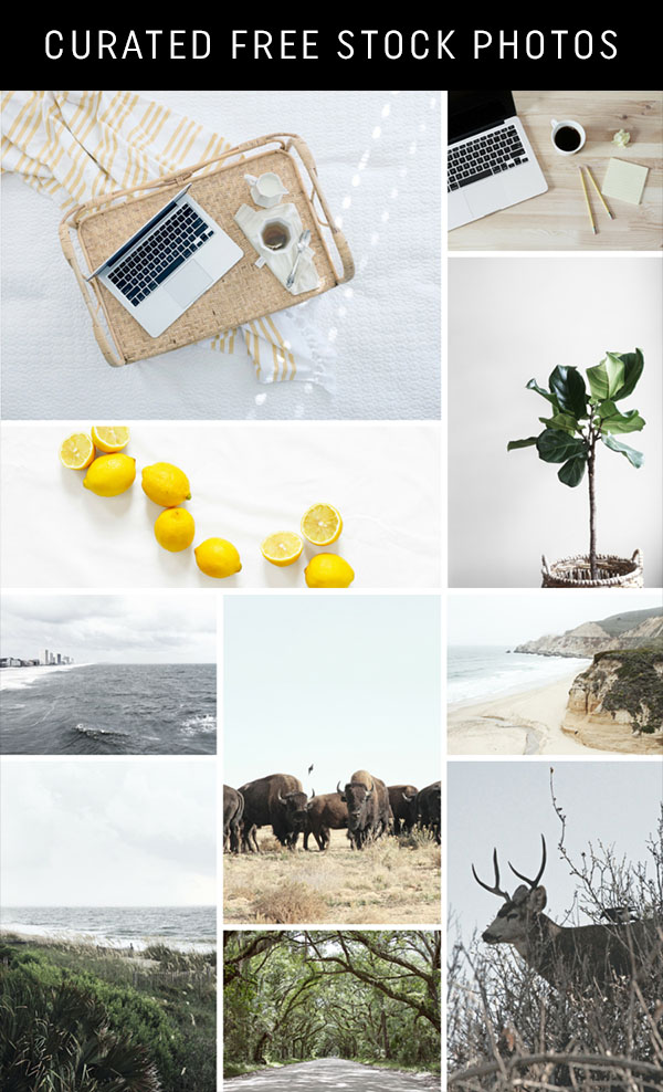Curated-Free-Stock-Photos