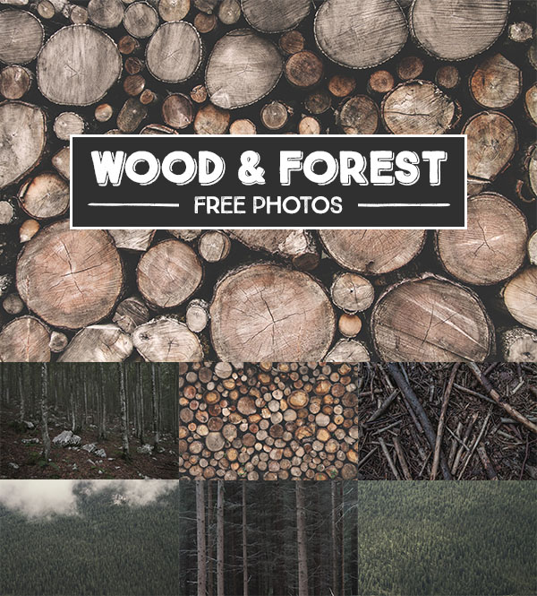Wood & Forest Free Photos
